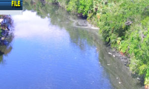 NEW RIVER UP 2